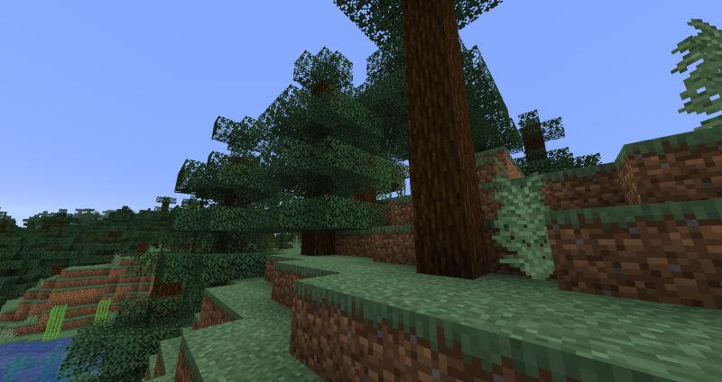拠点の裏手の松林