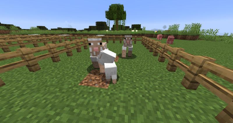 ヒツジの繁殖