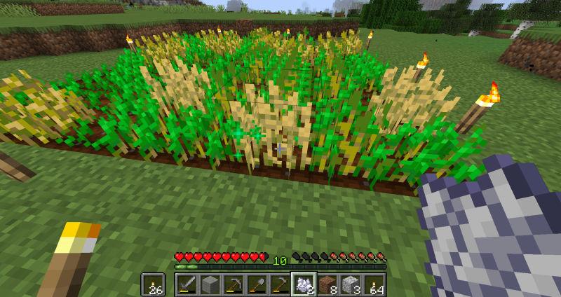 小麦に骨粉をかける