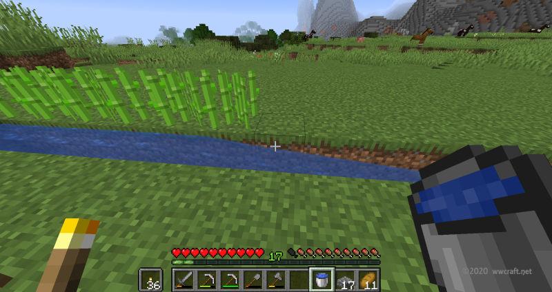 水源横にサトウキビを植える