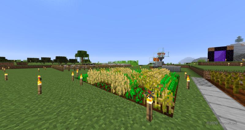 間違えたカボチャ畑
